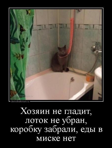hozjain_ne_gladit_lotok_ne_ubran_korobku_zabrali_edi_v_miske_net_165021.jpg