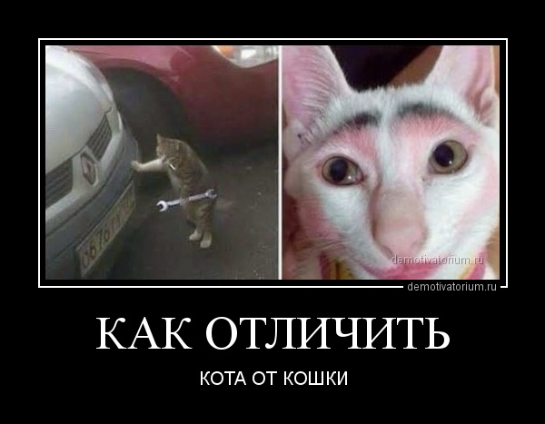 kak_otlichit__166015.jpg
