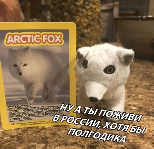 fotopodborka_pjatnicy_79_foto_1.jpg