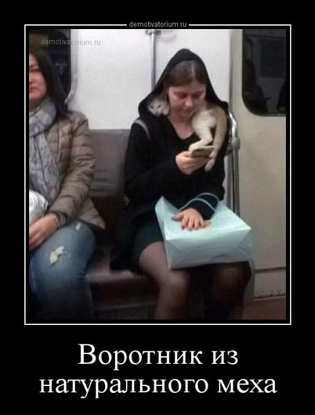 vorotnik_iz_naturalnogo_meha_165171.jpg
