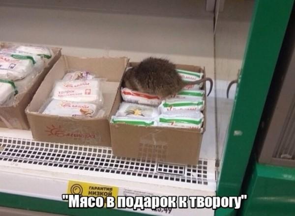 fotopodborka_sredy_114_foto_1.jpg