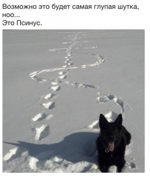 jumor_i_prikoly_na_nauchnye_temy_30_foto_20.jpg