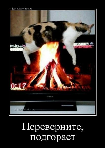 perevernite_podgoraet_167169.jpg