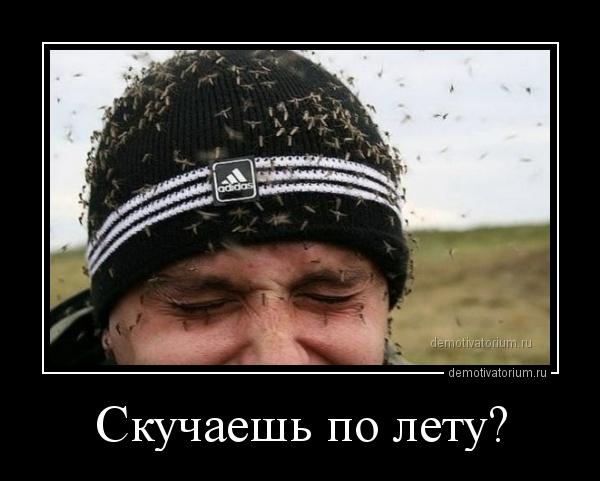 skuchaesh_po_letu_167264.jpg