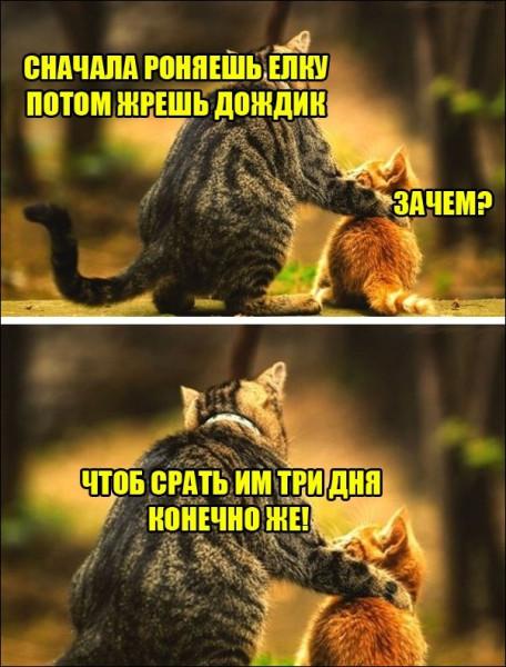 1543263192_foto-27.jpg