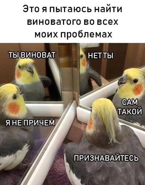 fotopodborka_sredy_38_foto_13.jpg