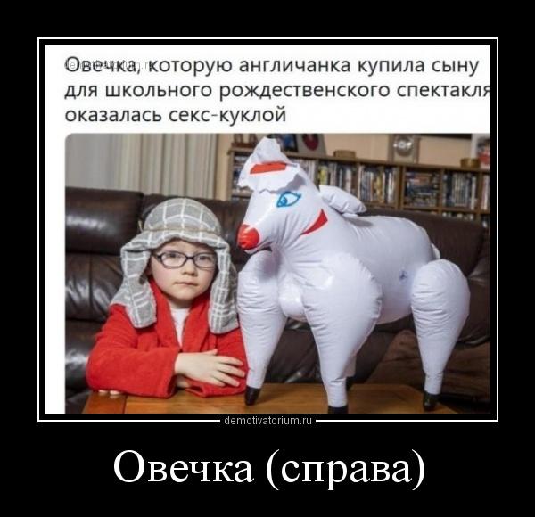 ovechka_sprava_168080.jpg