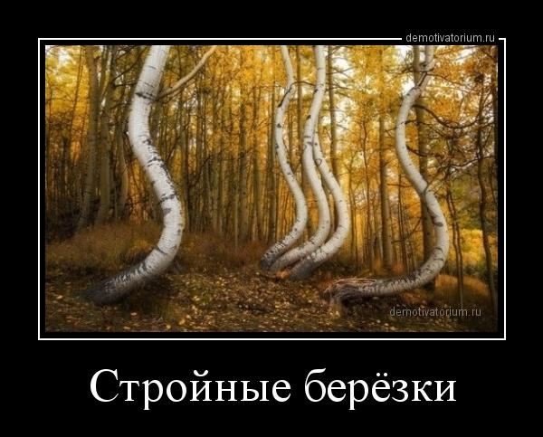 strojnie_berezki_168098.jpg