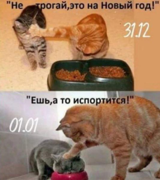 fotopodborka_ponedelnika_42_foto_9.jpg