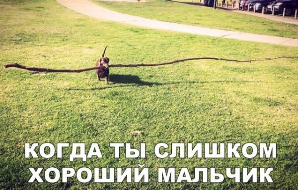legkijj_jumor_dlja_podnjatija_nastroenija_31_foto_1.jpg