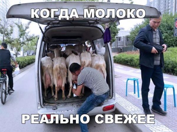legkijj_jumor_dlja_podnjatija_nastroenija_31_foto_12.jpg