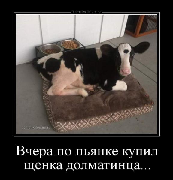 vchera_po_pjanke_kupil_shenka_dolmatinca_167785.jpg