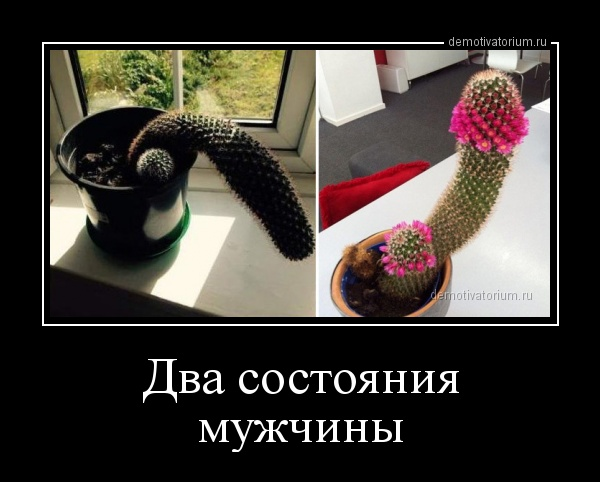 demotivatorium_ru_dva_sostojanija_mujchini_156600.jpg