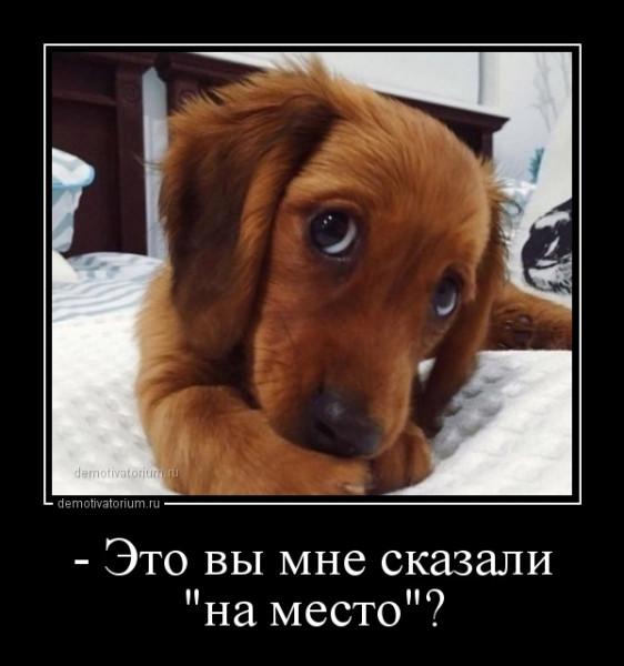 _eto_vi_mne_skazali_na_mesto_168392.jpg