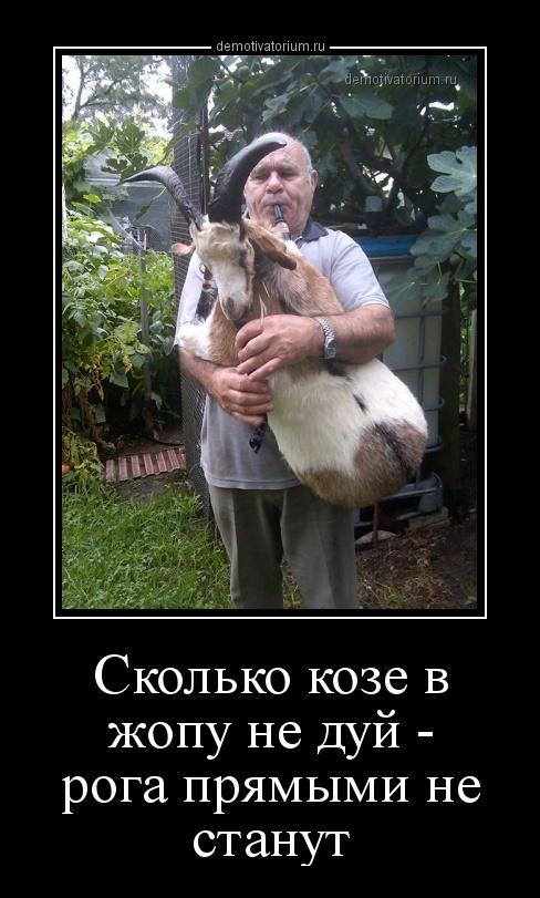 demotivatorium_ru_skolko_koze_v_jopu_ne_duj__roga_prjamimi_ne_stanut_156569.jpg