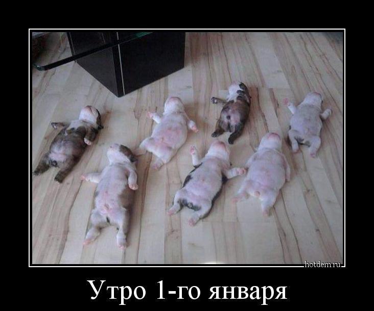 1547713646_demy-10.jpg