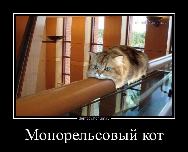 monorelsovij_kot_169636.jpg