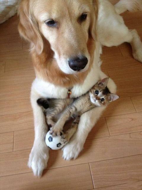 1547528851_cat_dog_relationships_15.jpg