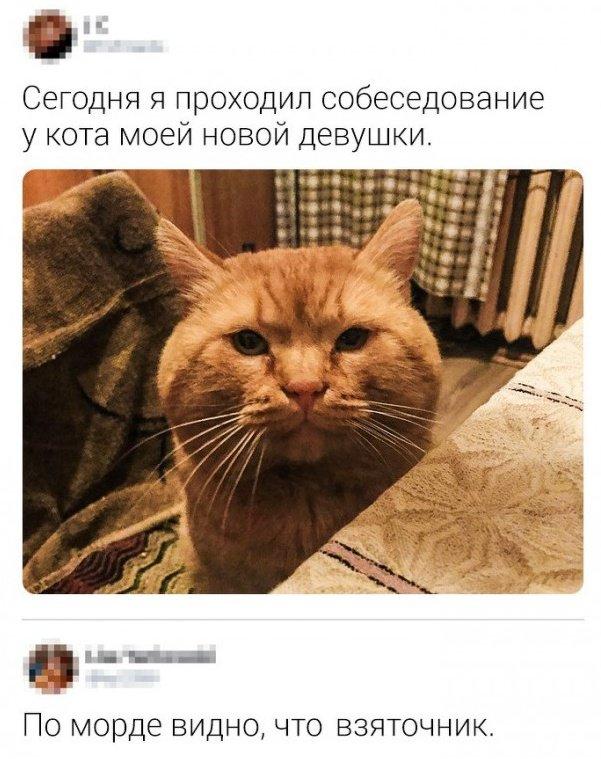 fotopodborka_chetverga_39_foto_1.jpg