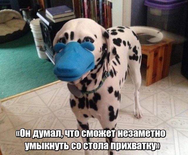 fotopodborka_sredy_35_foto_10.jpg