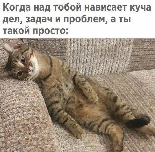 fotopodborka_vtornika_37_foto_1.jpg