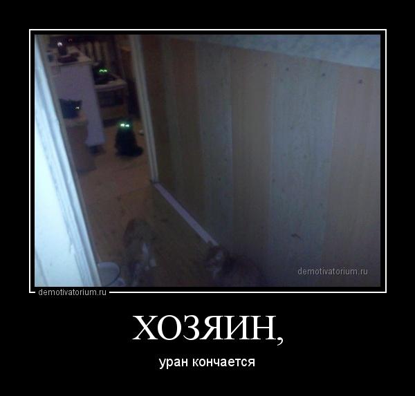 hozjain_169617.jpg