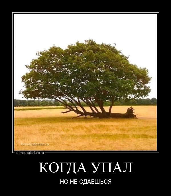 kogda_upal_170102.jpg