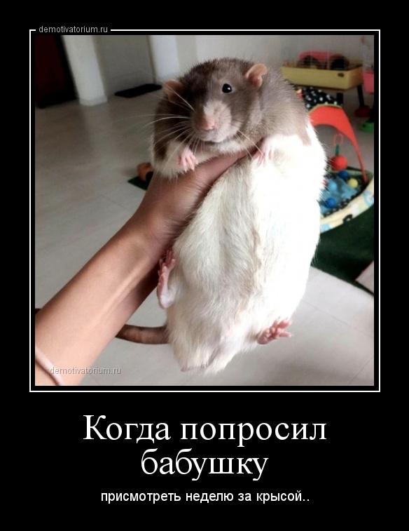kogda_poprosil_babushku_170160.jpg
