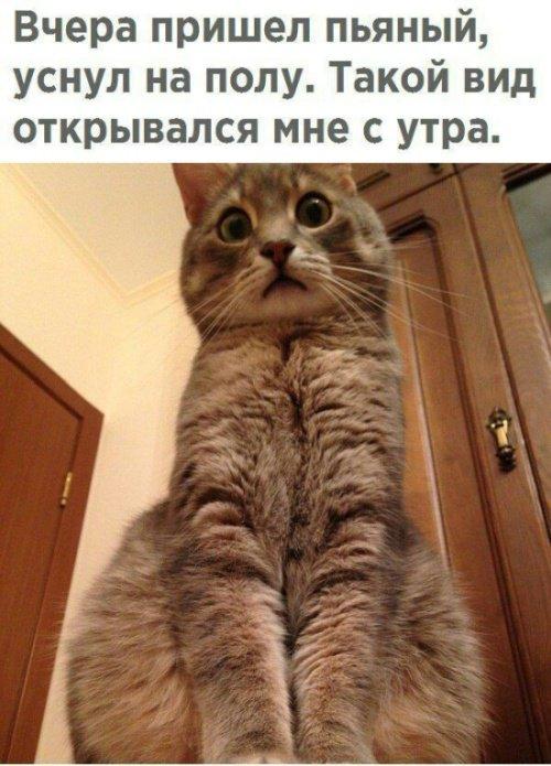 fotopodborka_chetverga_36_foto_15.jpg