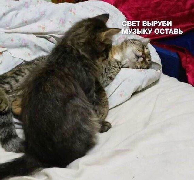 fotopodborka_vtornika_45_foto_4.jpg
