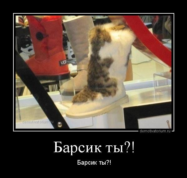 barsik_ti_170607.jpg