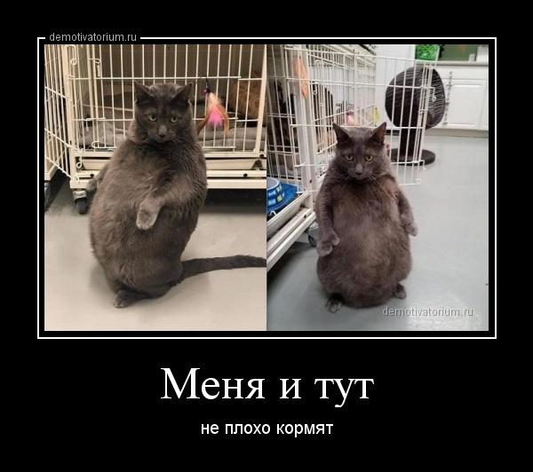 menja_i_tut_170811.jpg