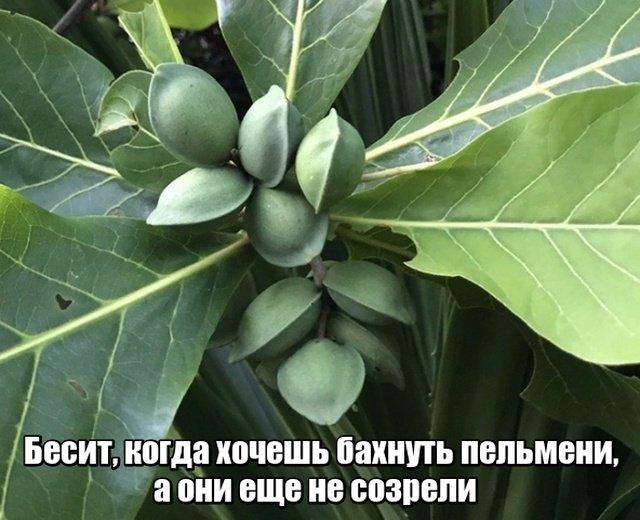 fotopodborka_pjatnicy_39_foto_11.jpg
