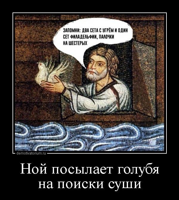 noj_posilaet_golubja_na_poiski_sushi_171003.jpg