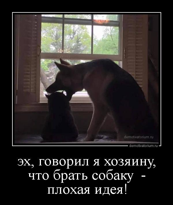 eh_govoril_ja_hozjainu_chto_brat_sobaku___plohaja_ideja_171479.jpg
