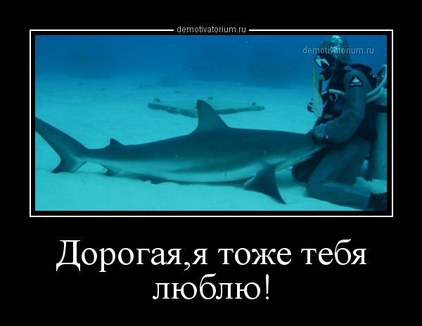dorogajaja_toje_tebja_lublu_171500.jpg