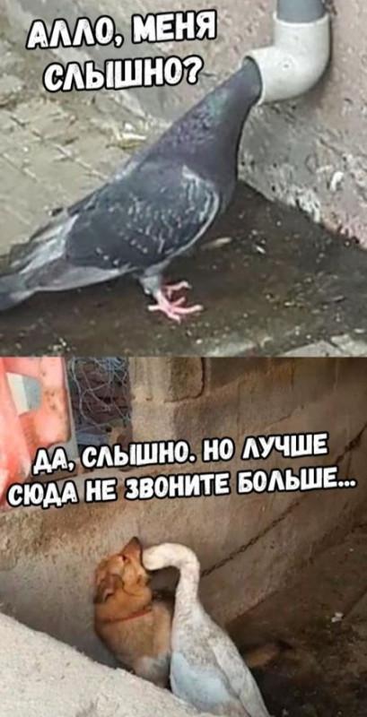 fotopodborka_vtornika_38_foto_5.jpg
