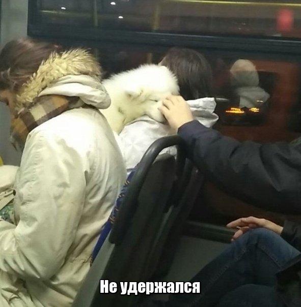 fotopodborka_sredy_39_foto_0.jpg