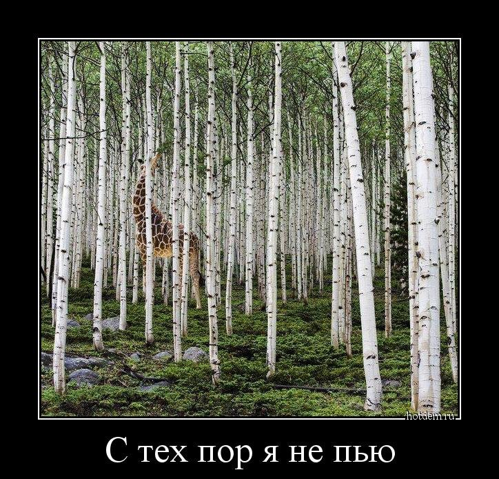 1552551783_demotivatory-5.jpg