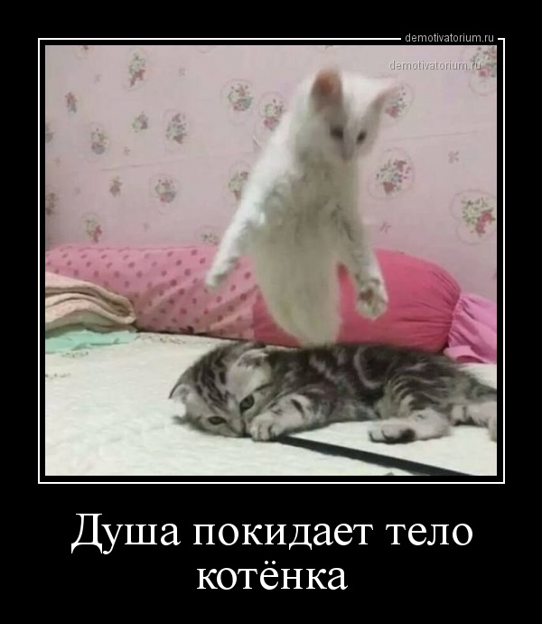 demotivatorium_ru_dusha_pokidaet_telo_kotenka_156990.jpg