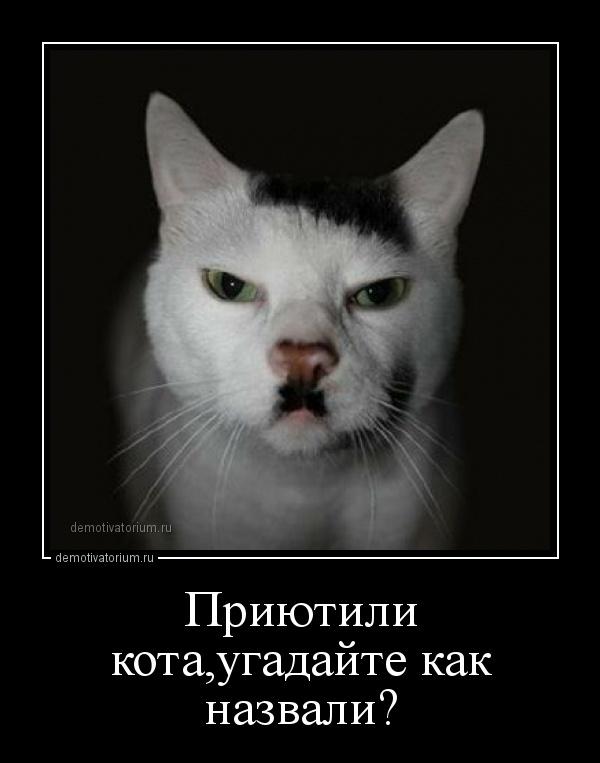 demotivatorium_ru_priutili_kotaugadajte_kak_nazvali_157890.jpg