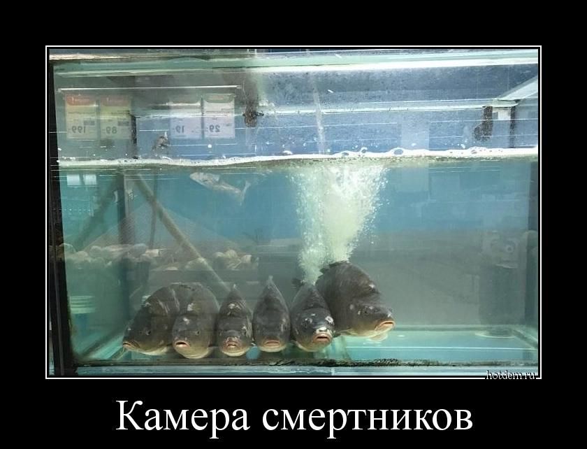 hotdem_ru_189380091034554740899.jpg