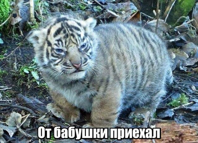 fotopodborka_chetverga_109_foto_1.jpg