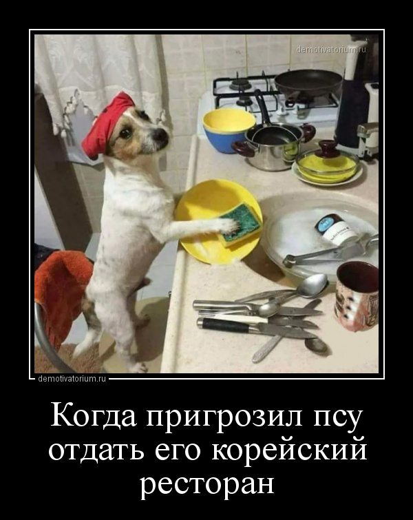 kogda_prigrozil_psu_otdat_ego_korejskij_restoran_157917.jpg