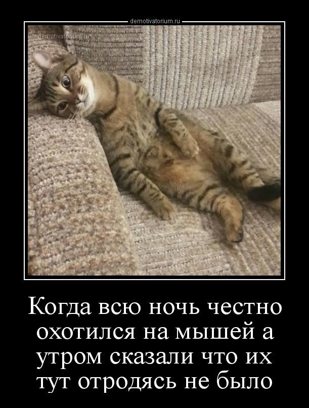 kogda_vsu_noch_chestno_ohotilsja_na_mishej_a_utrom_skazali_chto_ih_tut_otrodjas_ne_bilo_158506.jpg
