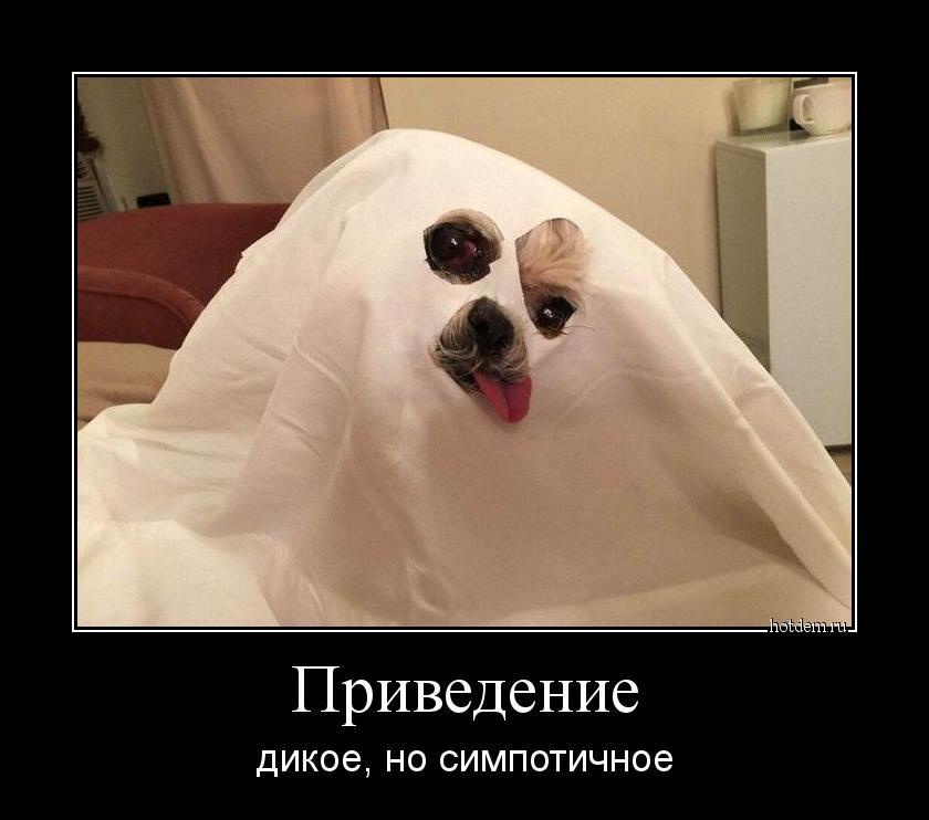 hotdem_ru_738858248694110892850.jpg