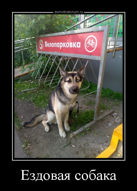 ezdovaja_sobaka_158679.jpg