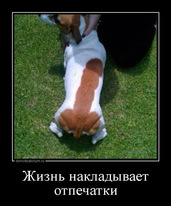 jizn_nakladivaet_otpechatki_158740.jpg