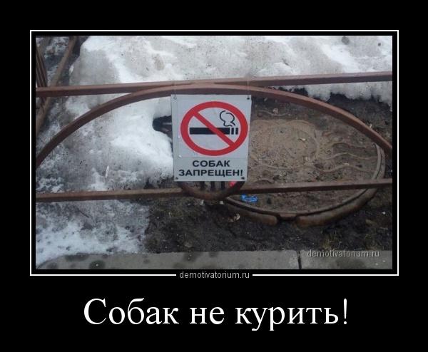sobak_ne_kurit_158412.jpg