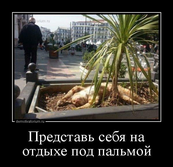 1530080954_demotivatory-1.jpg